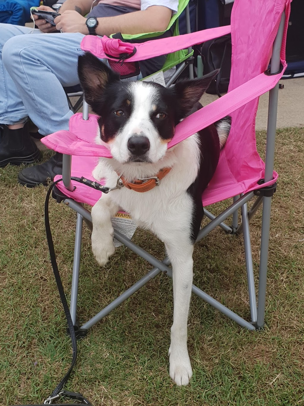 Dogs Queensland | point of interest | 247 King Ave, Durack QLD 4077, Australia | 0732522661 OR +61 7 3252 2661