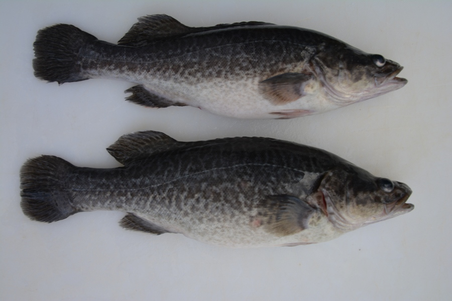 Uarah Fisheries   food   2738 Old Wagga Rd, Grong Grong NSW 2652, Australia   0269562147 OR +61 2 6956 2147