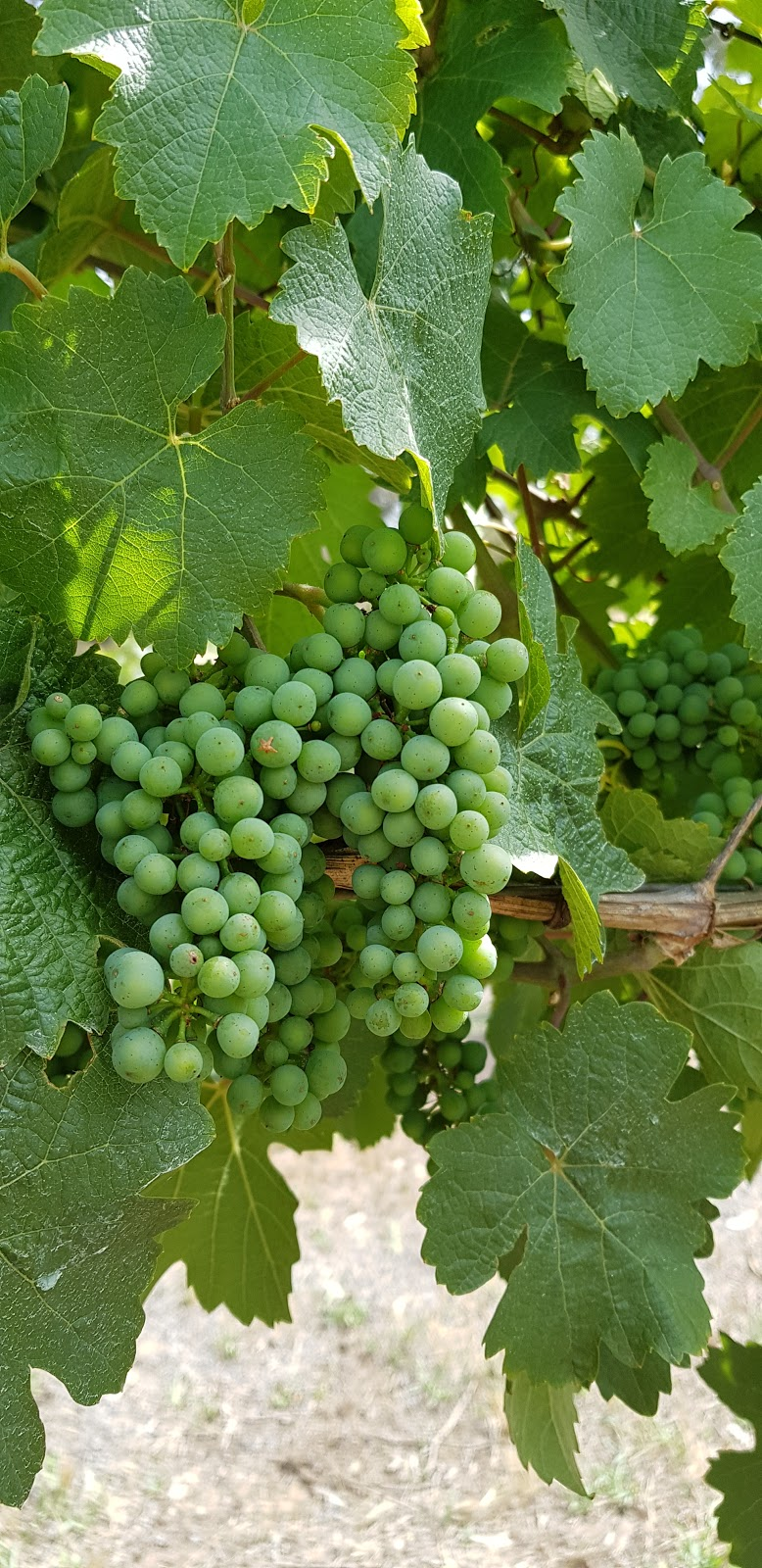 Harcourt Valley Vineyards   food   3339 Harmony Way, Harcourt VIC 3453, Australia   0354742223 OR +61 3 5474 2223