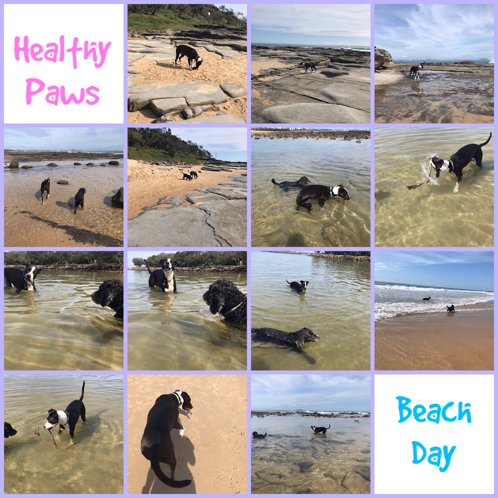 Healthy Paws Uniuqe Pet Care   point of interest   3 Eagleview Ct, Woombye QLD 4559, Australia   0413445712 OR +61 413 445 712