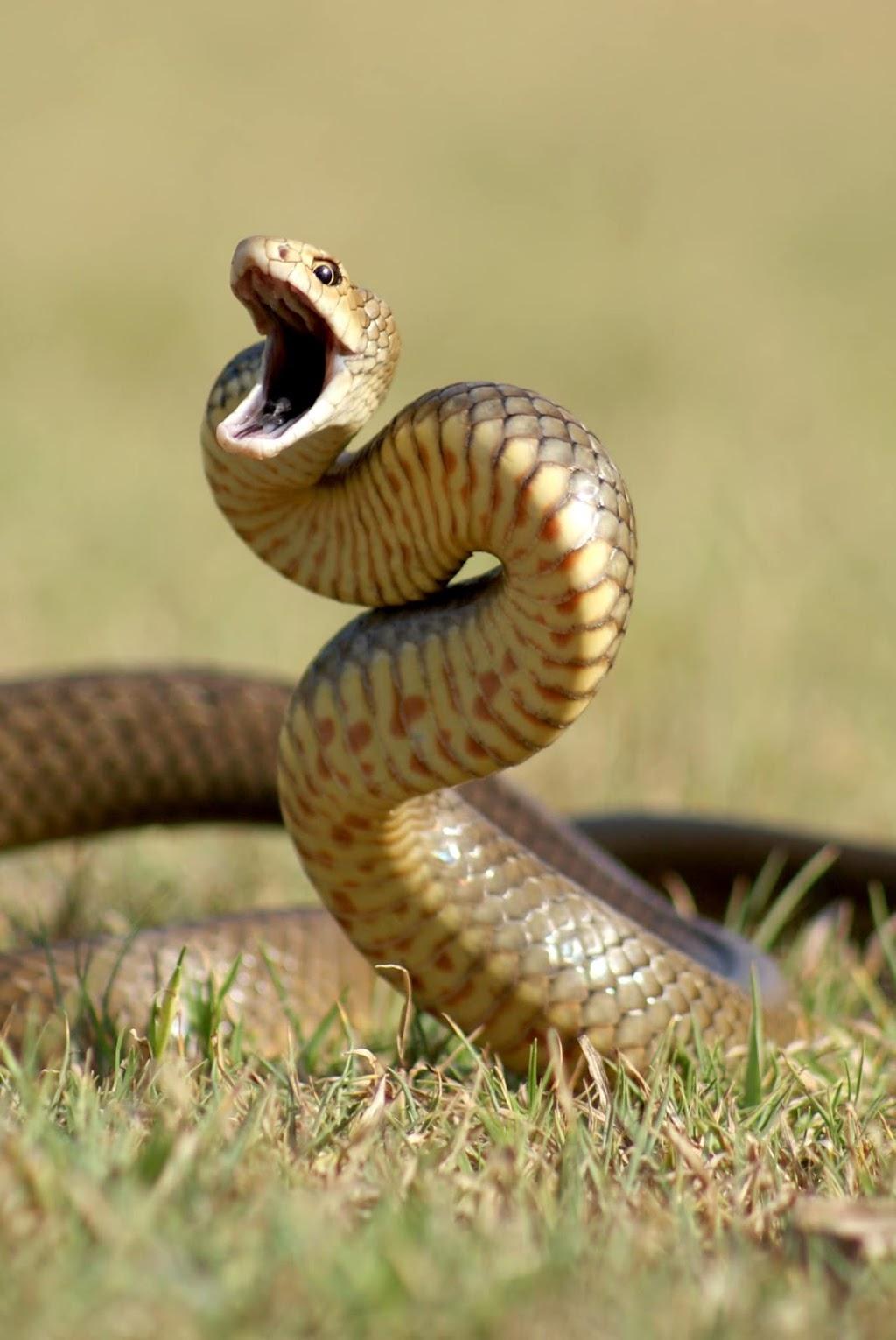 Snake Catcher Ipswich | home goods store | 22 Wimbledon St, Springfield Lakes QLD 4300, Australia | 0421455077 OR +61 421 455 077