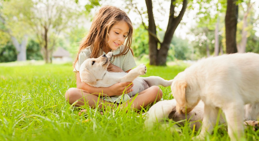 Palms Vets- Bayside Veterinary Clinic   veterinary care   34 Primrose St, Belgian Gardens QLD 4810, Australia   0747721513 OR +61 7 4772 1513