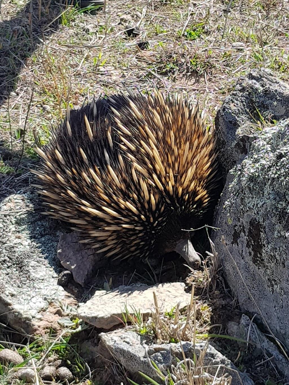 Mulligans Flat Woodland Sanctuary   zoo   Corner of Quinane Ave &, Justice Kelly St, Forde ACT 2914, Australia   0428224904 OR +61 428 224 904