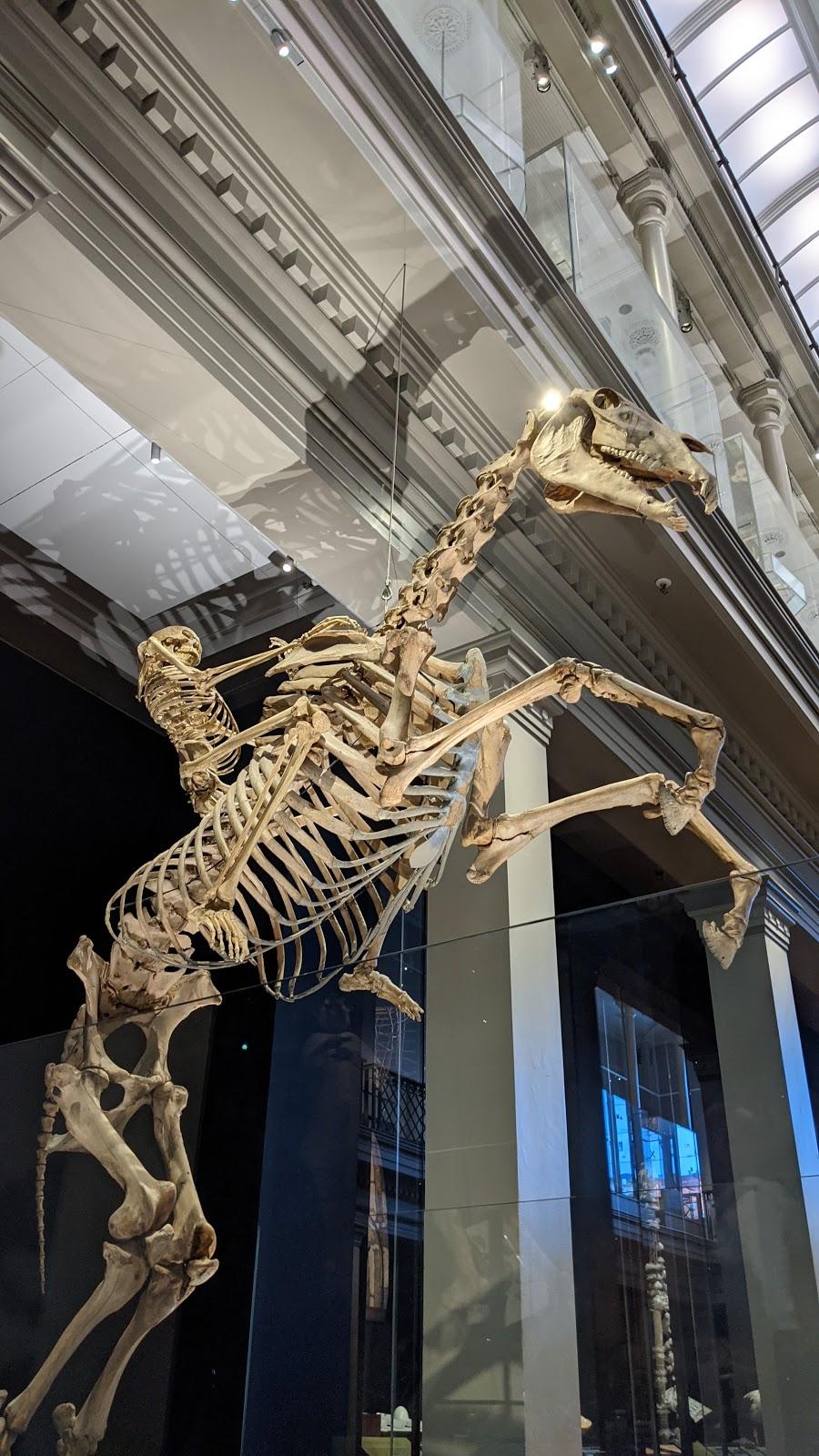 Australian Museum | museum | 1 William St, Darlinghurst NSW 2010, Australia | 0293206000 OR +61 2 9320 6000