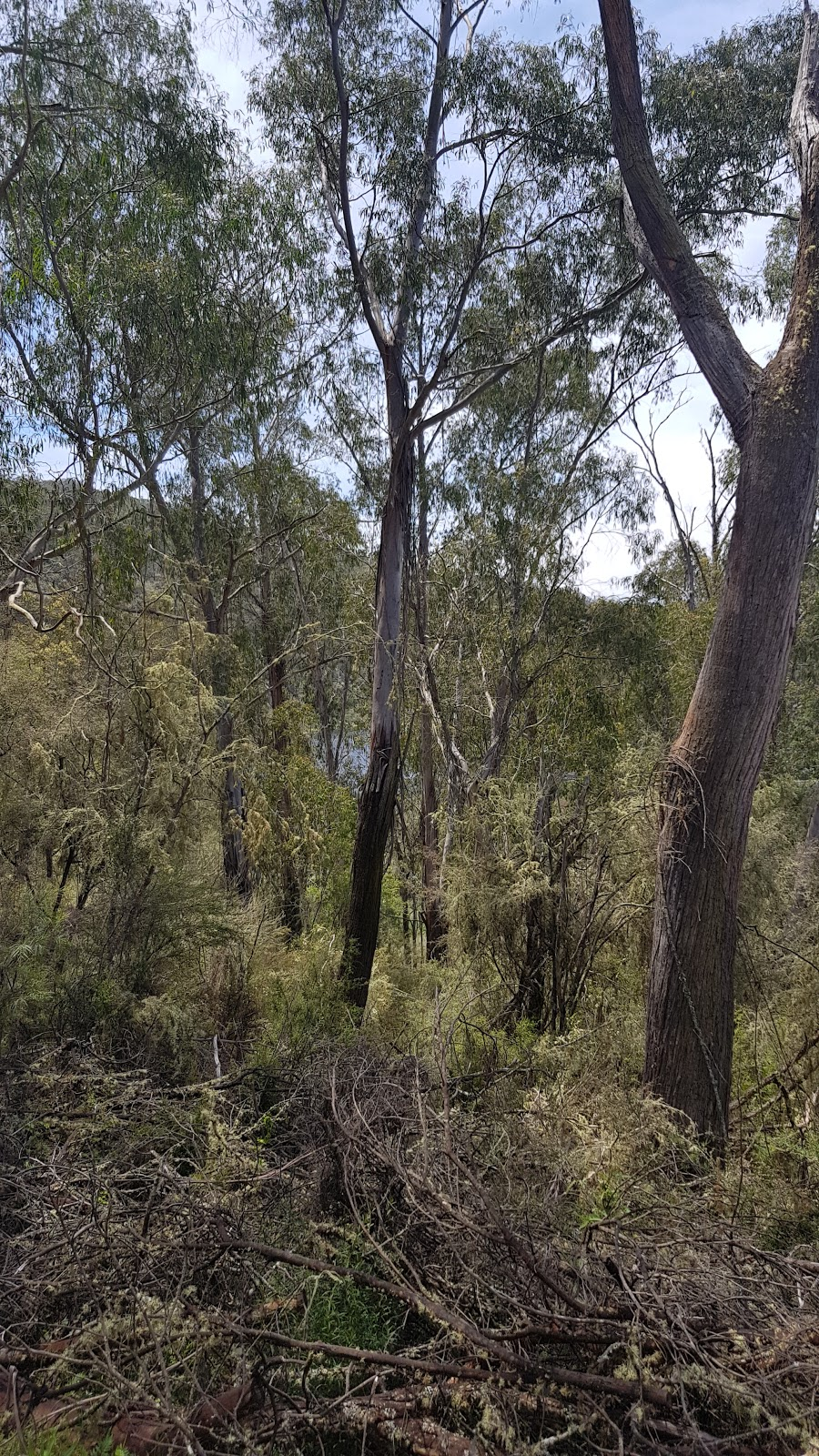 One Tree Hill Lookout | point of interest | Balley Hooley Rd, Buchan VIC 3885, Australia | 131963 OR +61 131963