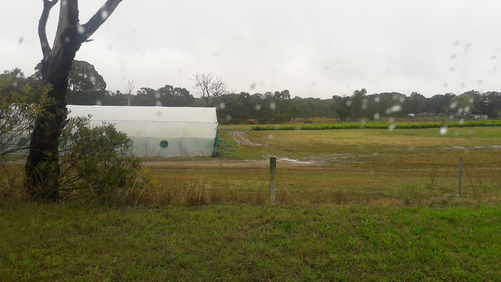 Lake Munmorah Flower Farm Pty Ltd   florist   422 Pacific Hwy, Doyalson North NSW 2262, Australia   0243588331 OR +61 2 4358 8331