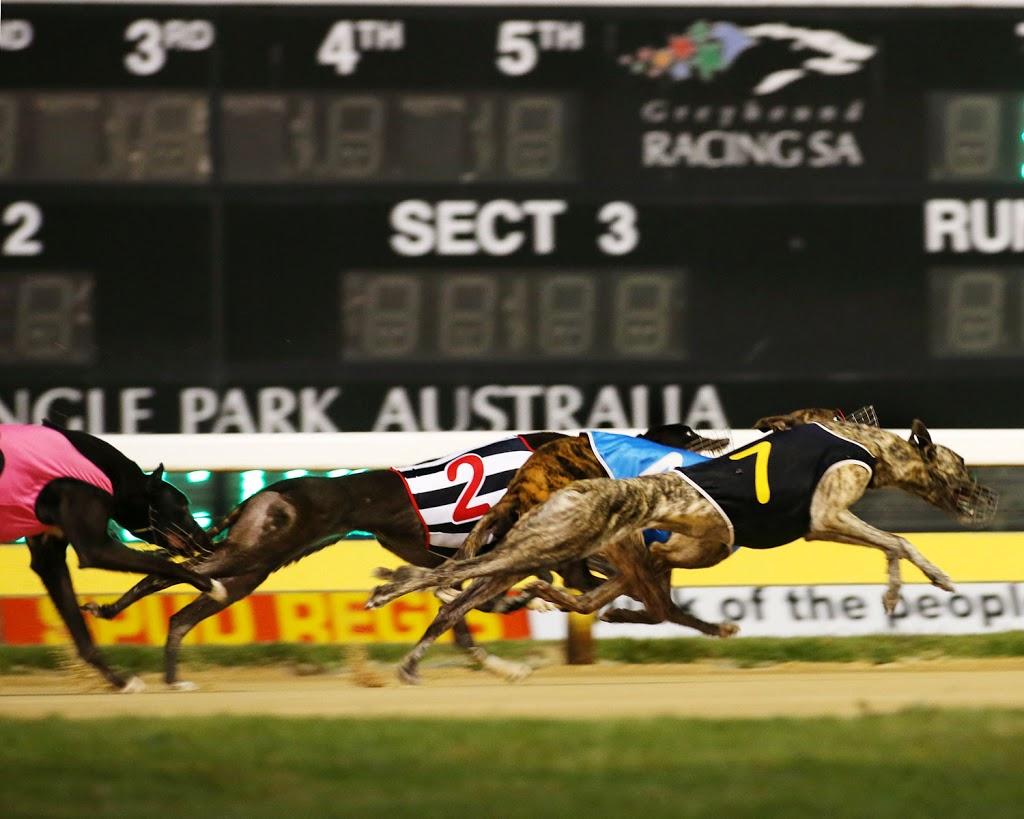 Greyhound Racing SA | stadium | 55 Cardigan St, Angle Park SA 5010, Australia | 0882437100 OR +61 8 8243 7100
