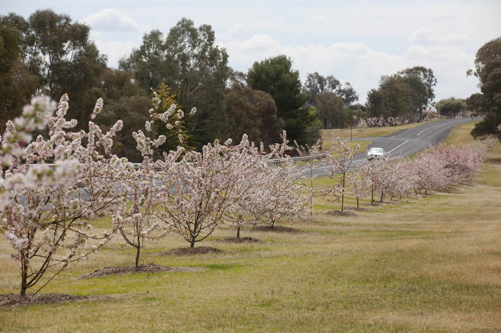 Sakura Avenue | park | Evans St, Cowra NSW 2794, Australia