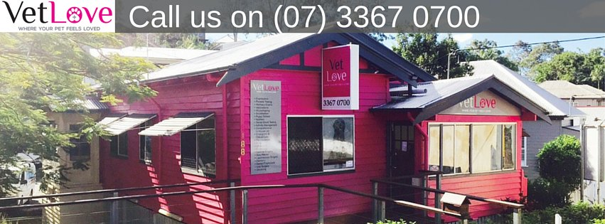 VetLove Bardon | veterinary care | 188 Boundary Rd, Bardon QLD 4065, Australia | 0733670700 OR +61 7 3367 0700