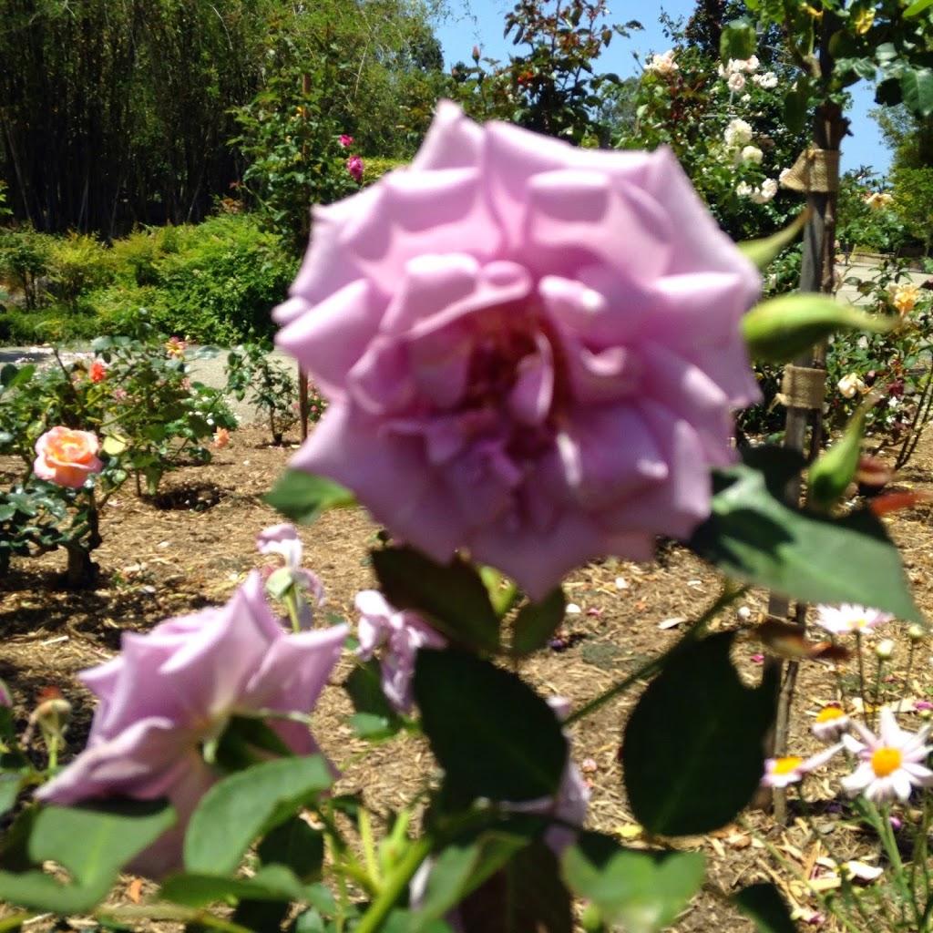 Friends of the Gold Coast Regional Botanic Gardens   park   232 Ashmore Rd, Benowa QLD 4217, Australia   1300465326 OR +61 1300 465 326