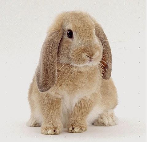 PETstock Keperra | pet store | Great Western Shopping Centre, h01/1028 Samford Rd, Keperra QLD 4054, Australia | 0733517244 OR +61 7 3351 7244