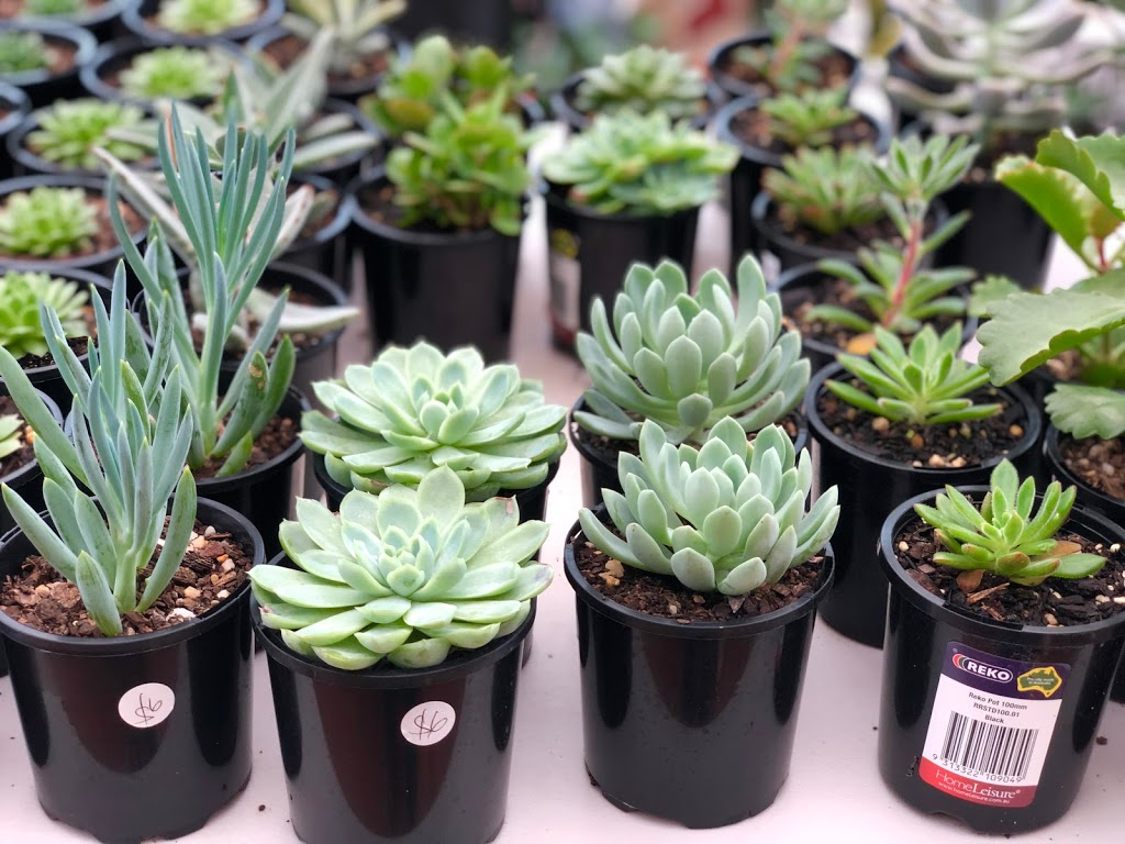 The Kariong Succulents | park | 7 Jackson St, Kariong NSW 2250, Australia | 0431972536 OR +61 431 972 536