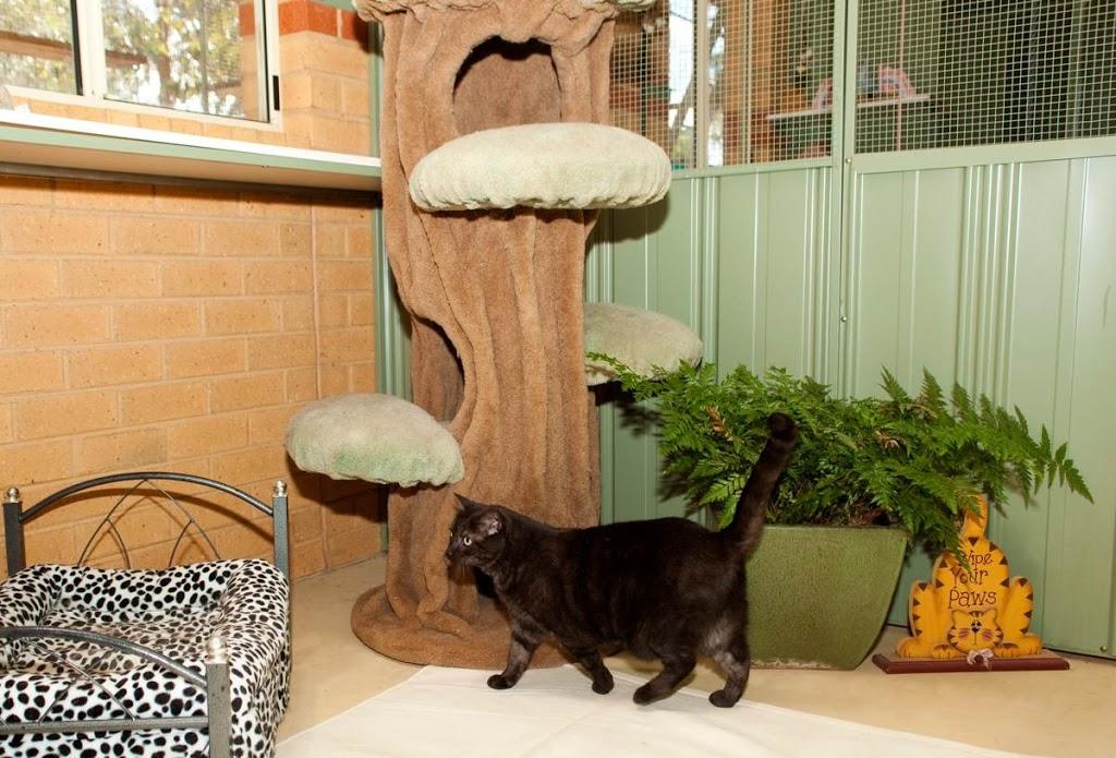 Vern Ryans Pet Resort Check in Center Newtown | veterinary care | 121 W Fyans St, Newtown VIC 3220, Australia | 0353695236 OR +61 3 5369 5236