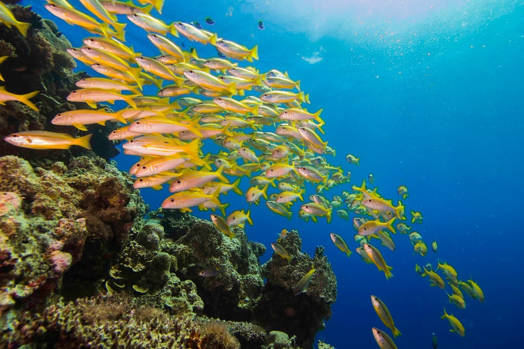 Dive in Australia   travel agency   Reef Fleet Terminal, 5/1 Spence St, Cairns City QLD 4870, Australia   0499464007 OR +61 499 464 007