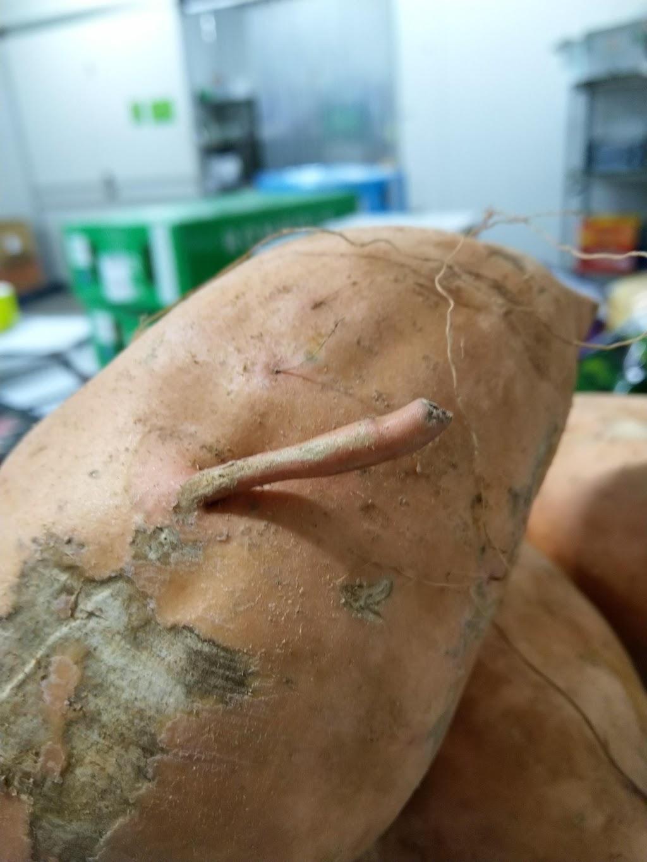 Growers Own Produce Distribution | point of interest | 31 Glen Isla Rd, Proserpine QLD 4800, Australia | 0749451044 OR +61 7 4945 1044